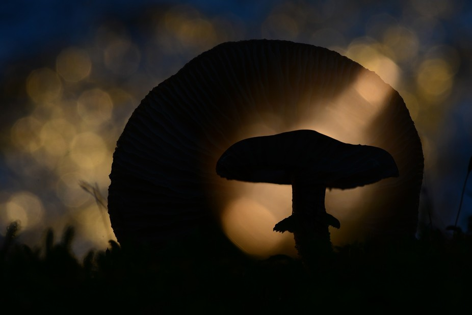 In moistly dark woods you can find them:  mysterious mushrooms