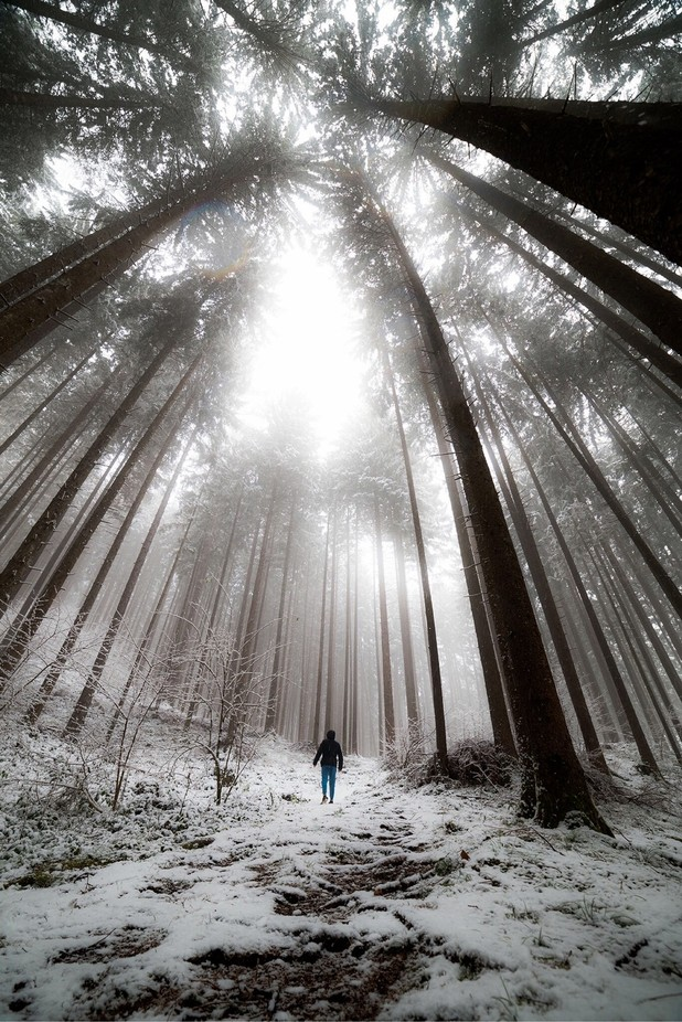 Into the freez forest by giovannicastellaz - The Cold Winter Photo Contest