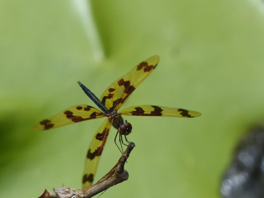 Taken at the Botanical Gardens in Benowa, Queensland