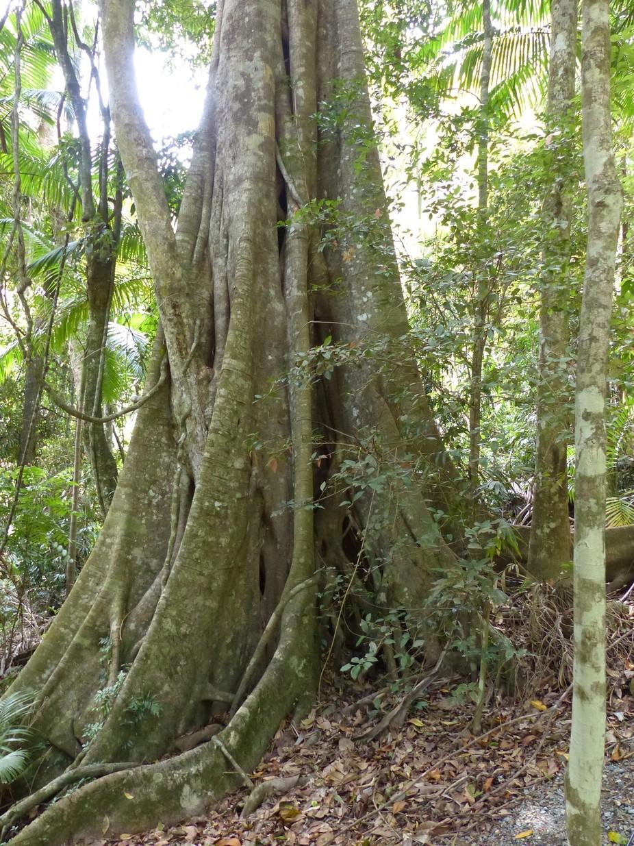 Taken at the Rainforest Skywalk at Tambourine Mountain, Queensland