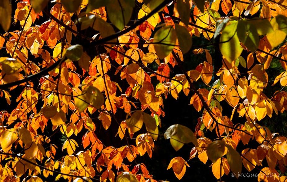 Sun through the Leaves-
