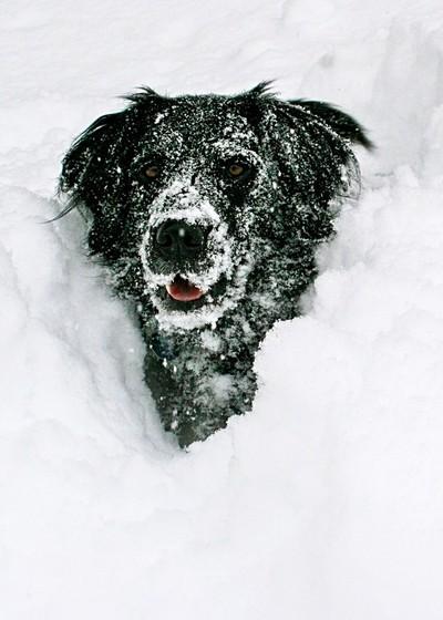 Fun in deep snow.....