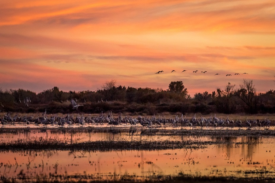 Amazing colors of the New Mexico sky as seen from a blind on the east side of a pond at sunset. T...