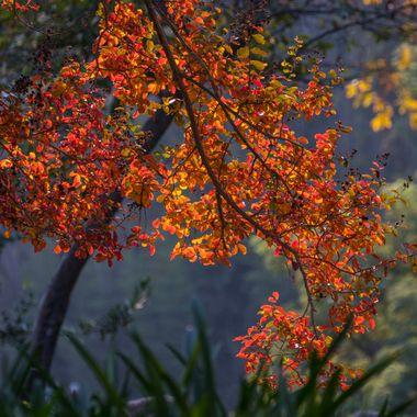 Autumn leaves IMG_6664