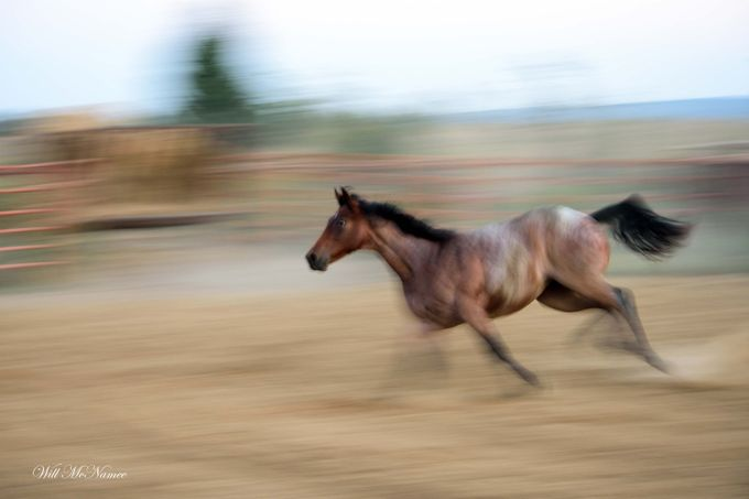 DSC_2640Colt Running by willmcnamee - Fast Photo Contest
