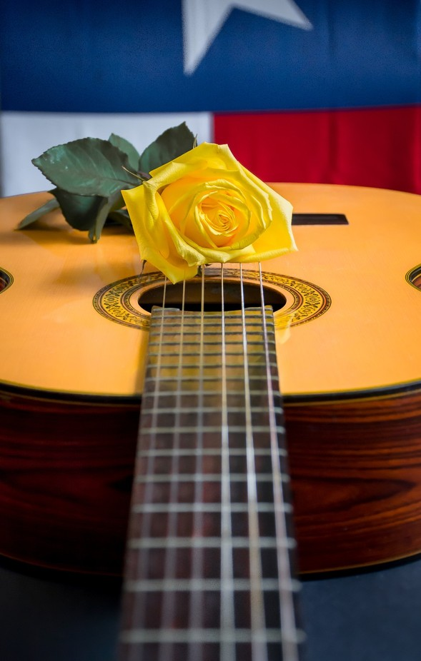 Yellow Rose of Texas-9 by dmbates - Musical Instruments Photo Contest