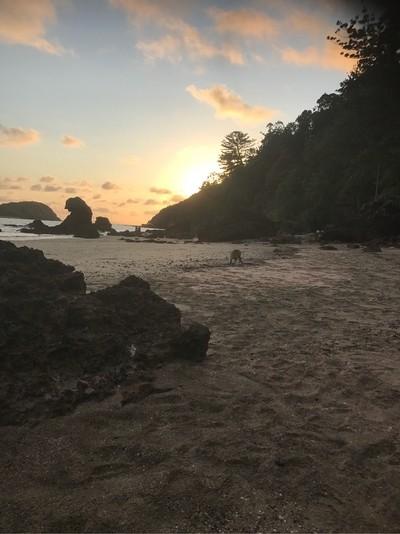 Kangaroo on beach in morning light