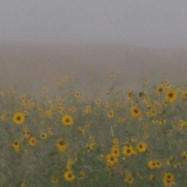 Foggy flowers
