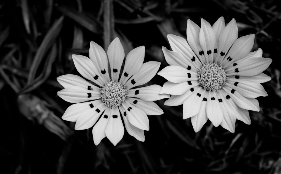Saw these two beautiful flower blooms that had patterns on each petal. Definitely worthy of a cap...