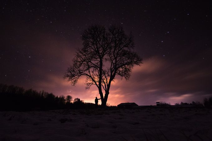 Hello! by jaanstein - Tree Silhouettes Photo Contest