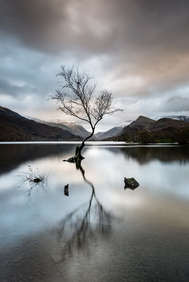 Lone Tree by jamesaphoto - Stillness Photo Contest