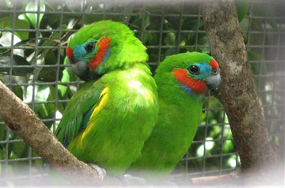 Currumbin birds