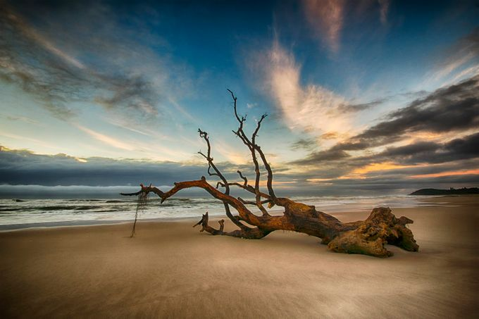 Driftwood 15 by DanMac - Fallen Trees Photo Contest
