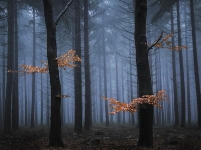 Last remaining autumn
