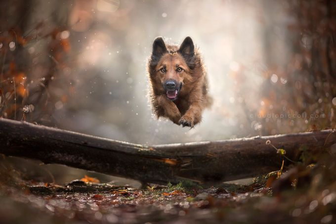 Flying dog - Aemy by ClaudioPiccoli - Dogs or Cats Photo Contest