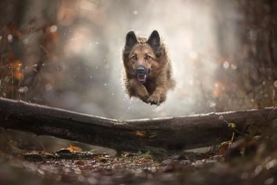 Flying dog - Aemy