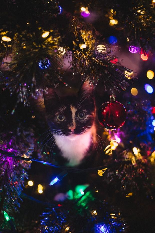 Christmas Lights by babistudio - Holiday Lights Photo Contest 2017