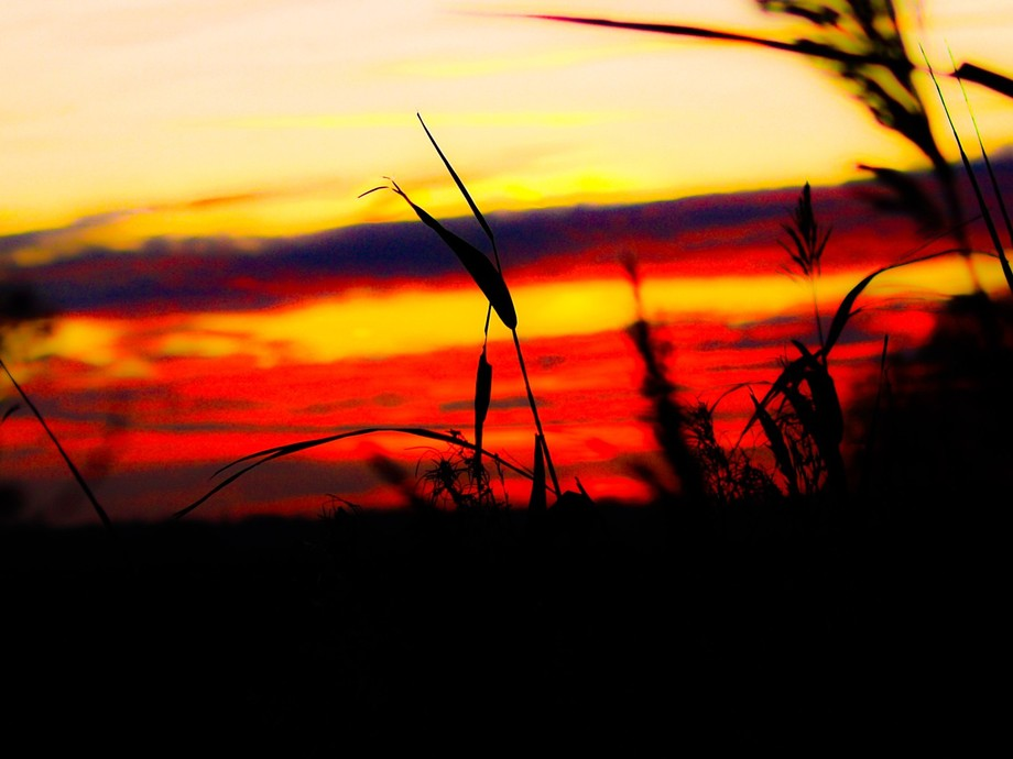 Beautiful red night sky behind some reeds