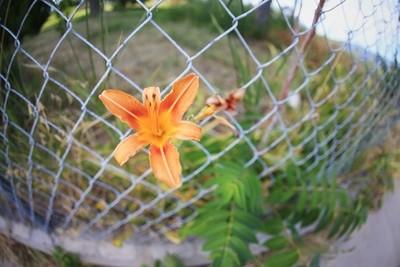 Flower in Utah