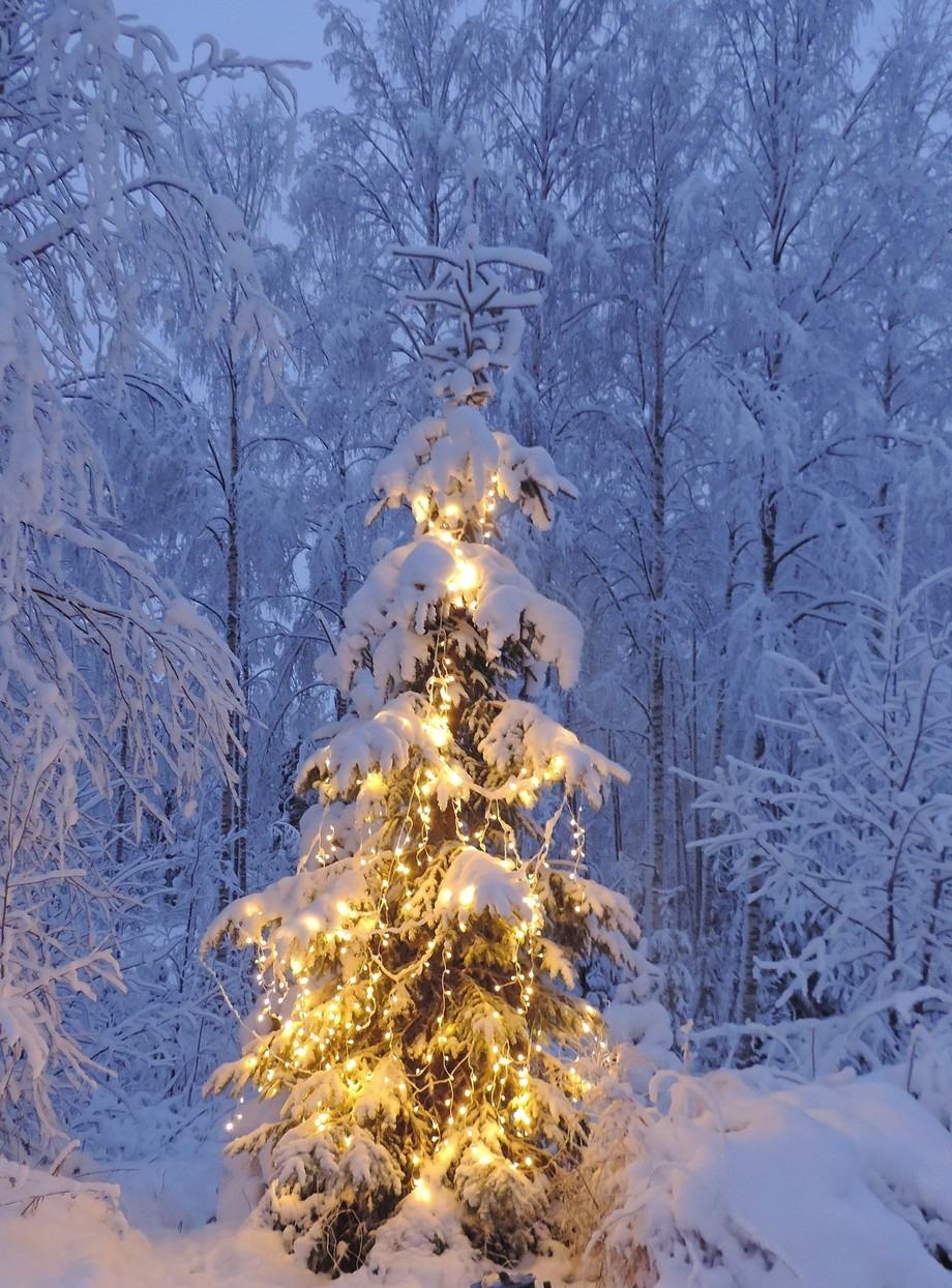 Christmas tree outside by AnnuO - Holiday Lights Photo Contest 2017