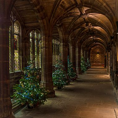The Cloisters of Chester Cathedral, decked with trees at Christmas.