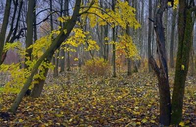 last leaves...