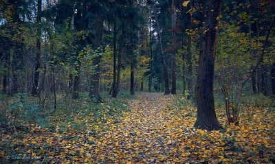 autumn in the forest park...