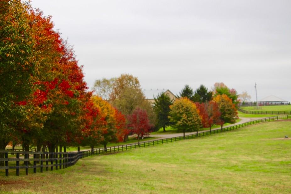 Tree line in early November on Kentucky horse farm