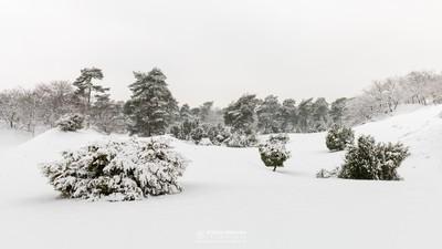 Winter Impression