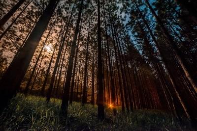 Moonlit woods