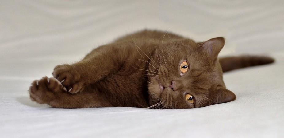 portrait of my cat Orfey
