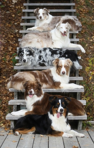 Six Aussies - Down on Stairs