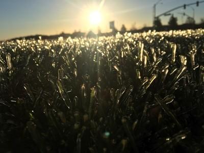 Grass in ice @brandimichelphotography