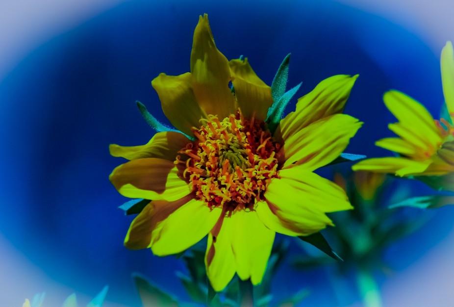 Beautiful wildflower along the road in Utah.