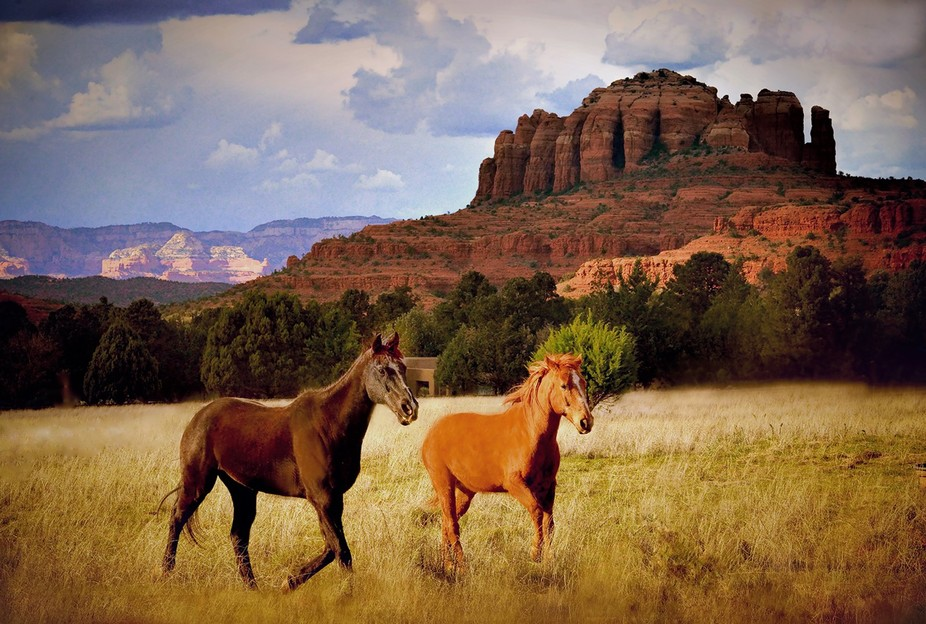 I captured this image in Mesa, Arizona at the Double H Horse Sanctuary