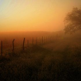 Foggy fence line , cover version