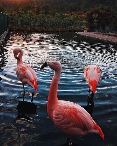 Flamingos in da city