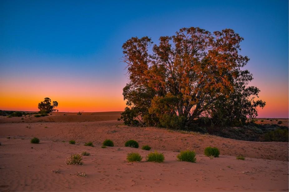 Perry Sandhills desert gumtree