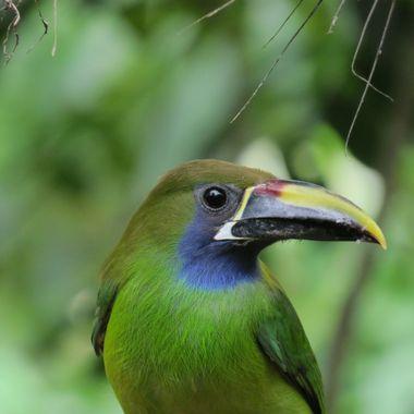 Found near Poas Volcano in Costa Rica, 12/2017