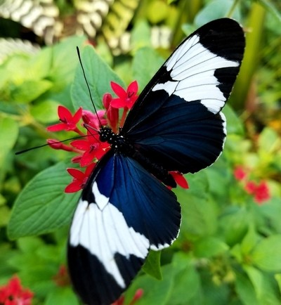 Tennessee Aquarium - Butterfly