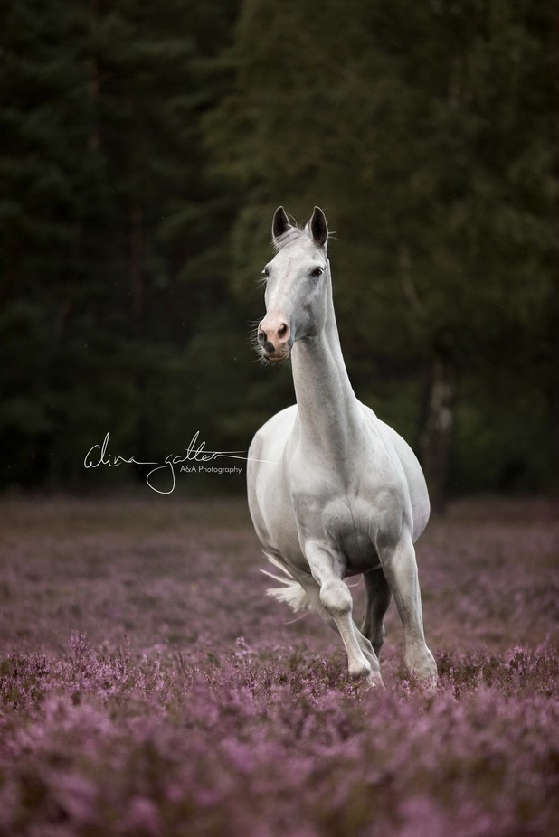 White Horse Heather by AAPhotography-byAlina - Social Exposure Photo Contest Vol 13