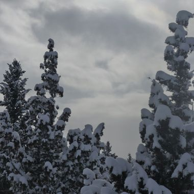 Snow on the Arm of Trees