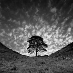 The iconic view of the Sycamore Tree on Hadrians Wall.