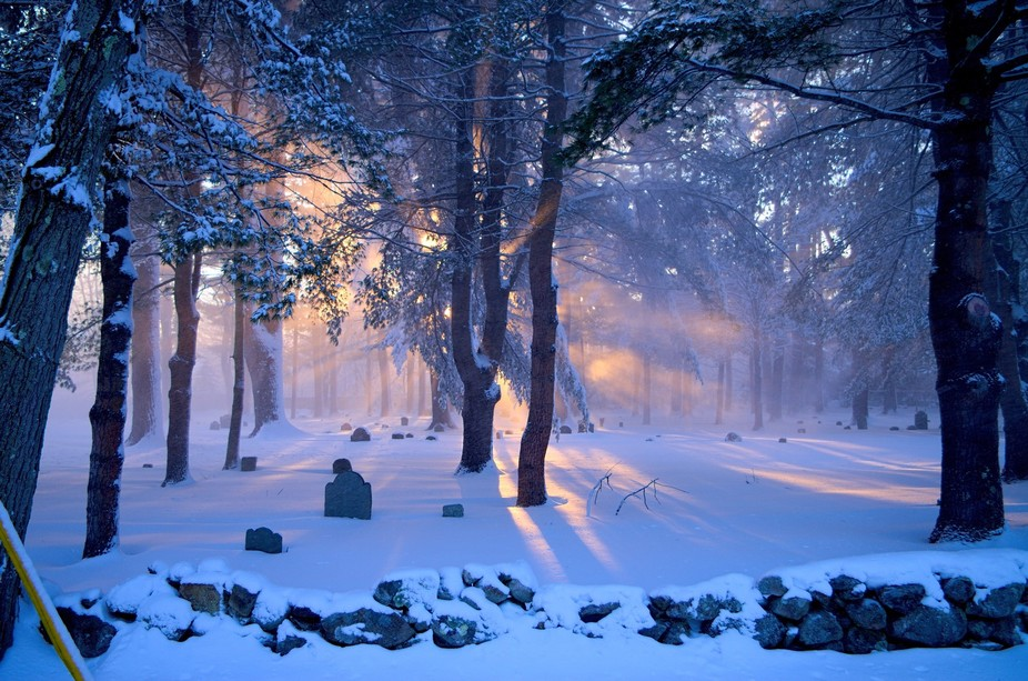 Afternoon sun giving a beautiful warm glow to snow blown from the trees. Taken at Pine Grove Ceme...