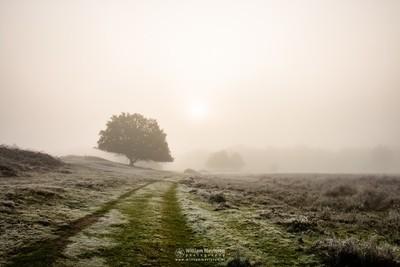 Misty Sunrise Path