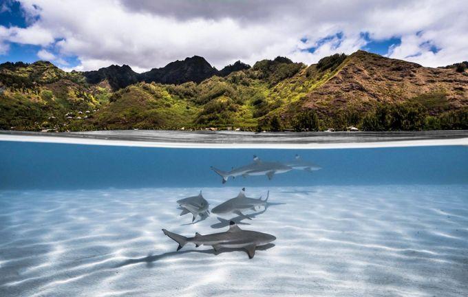 divided paradise by romainbarats - Celebrating Nature Photo Contest Vol 4