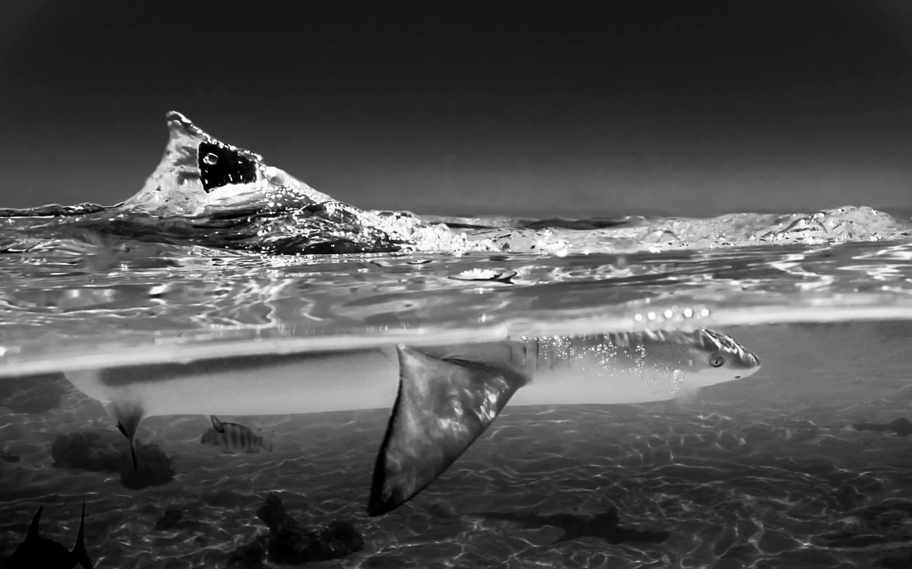 Wildlife In Monochrome Photo Contest Winner