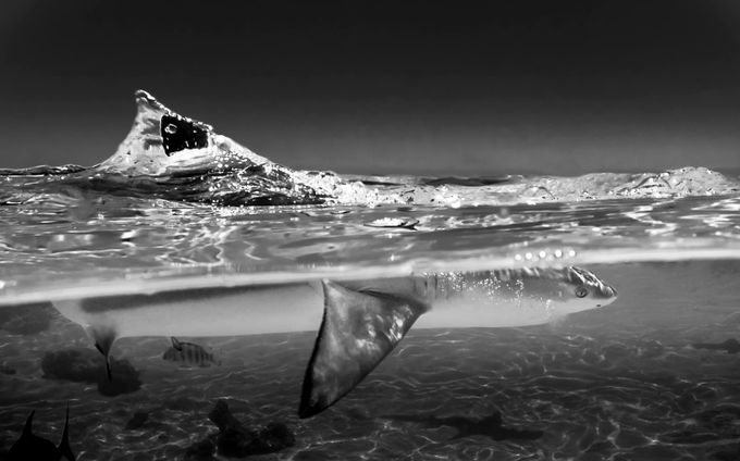 divided black tip by romainbarats - Monochrome Creative Compositions Photo Contest