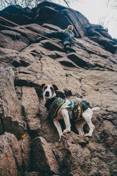 Climber dog
