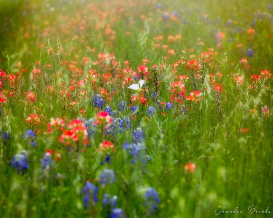 Bloom With Joy